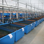 polyester visbakken vishuis maasland
